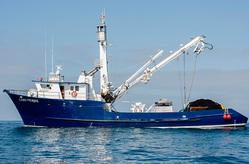 Sardine vessels